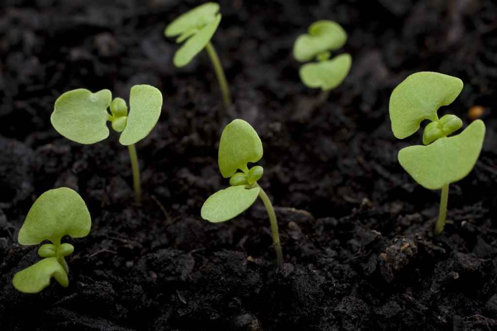 http://www.dreamstime.com/royalty-free-stock-photos-seedlings-image26271508