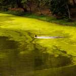Polluted Lake